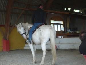 cheval-mini-300x225