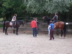 J-7 : journée de travail avec les chevaux dans Les infos du moment chevaux-300x225